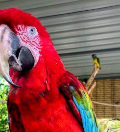Viveiro Botanical Garden & Zoo di terra